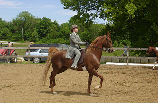 Hendricks County Open Horse Show